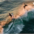 Jersey Surfing - M/S PP