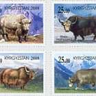 Mountain Yaks of Kyrgyzstan