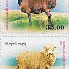 Pets - Breeds of Sheep