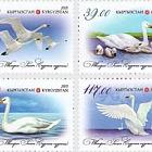 WWF - Whooper Swan