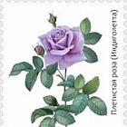 Flora of Kyrgyzstan - Roses