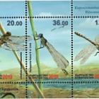 Fauna del Kirghizistan - Libellule