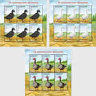 Poultry - Ducks