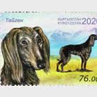 Race kirghize de chiens - Dobet et Taigan