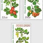 Medicinal Plants of Kyrgyzstan