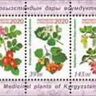 Plantas Medicinales de Kirguistán