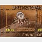 Fauna of Kyrgyzstan -  Spiders