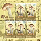 Edible Mushrooms of Kyrgyzstan- (Rough-Stemmed Bolete)