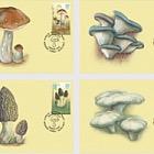 Edible Mushrooms of Kyrgyzstan