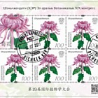 19th International Botanical Congress in Shenzhen (PRC) - Crysanthemum