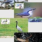 Birds of Kyrgyzstan