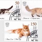 Domestic Cats - Set CTO