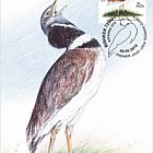 Bird of the Year - The Little Bustard