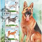 Domestic Dogs - M/S CTO