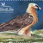 Bird of the Year (III) - The Bearded Vulture