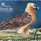 Bird of the Year (III) - The Bearded Vulture - CTO