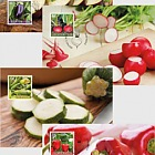 Crop Plants - Vegetables