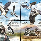 Lithuanian Animals, Northern Lapwings