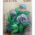 Lithuania Red Book, Plants (Allium Ursinum)