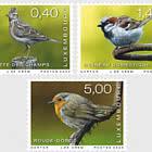 Rare Birds 2020