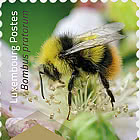 E50g Wild Bees - Strip