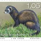 Europa 2021 - Endangered National Wildlife - Western Polecat