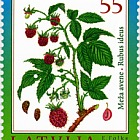 Wealth of Latvian Forests - Raspberry 2010