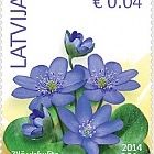 Anemone hepatica - Flowers (standard) reprinted 2016