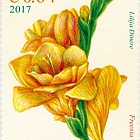 Flowers - Freesia