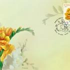 Flowers - Freesia