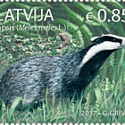 Animals of Latvia - European Badger