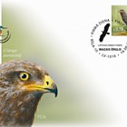 Latvian Fund for Nature - Lesser Spotted Eagle, Clanga Pomarina