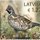 Birds - Hazel Grouse