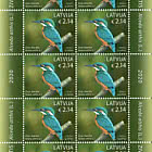 Birds - Common Kingfisher
