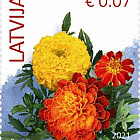 Flowers (Reprint) 2021 -  French Marigold