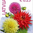 Flowers (Reprint) 2021 - Dhalia