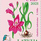 The Latvian Fund for Nature – Shingled Gladiolus
