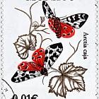 Arctia Caja