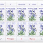 National Species- (Thick Rooted Campanula)