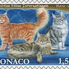 International Cat Show - CTO
