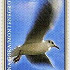 Fauna 2007