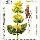 Flora 2018 - Gentiana lutea