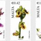Maltese Flora Series VI