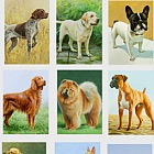 Dogs - (Cards Dogs 2018 68-83 Set x 10)
