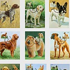 Dogs -  (Cards Dogs 2018 w/s 68-83 Set x 10)