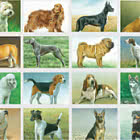 狗系列II – 2020