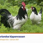 Dutch Chicken Breeds (552a)