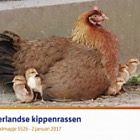 Dutch Chicken Breeds (552b)