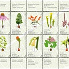 Jardins botaniques aux Pays-Bas