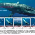 Endangered Mammals - Blue Whale